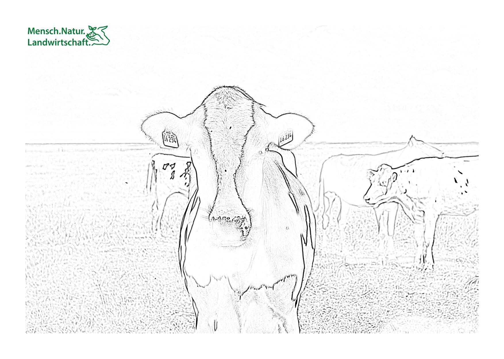 Malbuch kühe weide