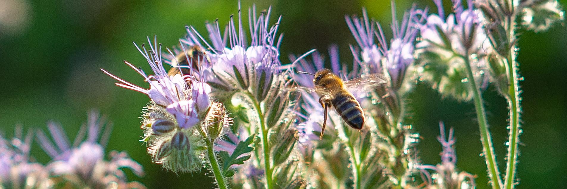 natur landwirtschaft biene bremen