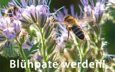 Insekten schützen – Blühpate werden!